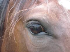 Reitanlage, Tierheilpraktiker, Radionik, Pferdeostheopathie, Quarter Horse, Reitstall, Tierheilpraxis, Osteopathie, Dorntherapie, energetik,